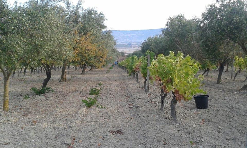 La riscoperta del retsina ed il suo ritorno in cima ai vini greci più pregiati