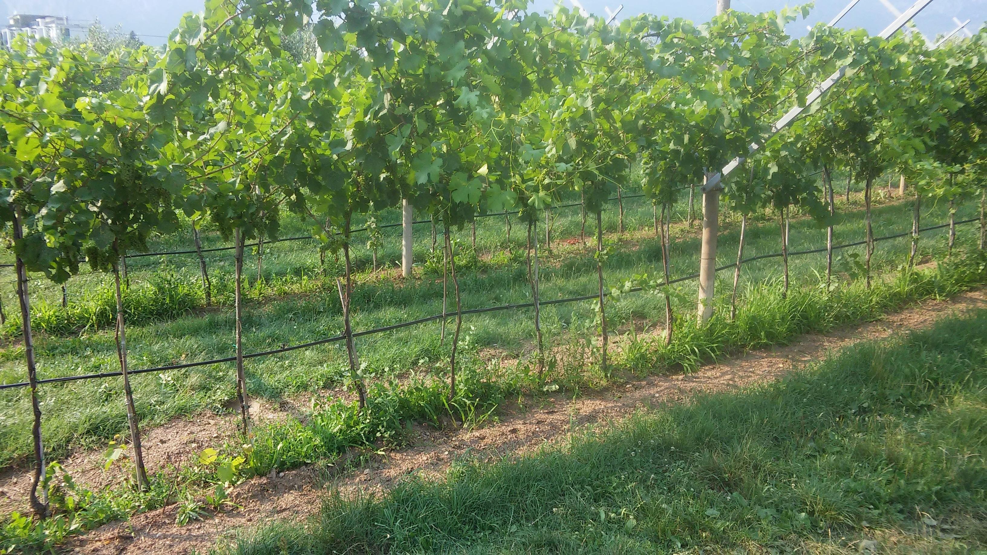 Elenco e storia dei vini aromatizzati dell'antichità, del medioevo e di oggi